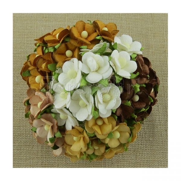 Mixed Brown and White Sweetheart Blossom  1,5 cm - 5 ks